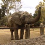 dreamstimefree_elephant81124